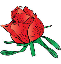 red unopened peony bud with green leaves vector image