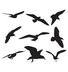 seagull set silhouettes on white background vector image