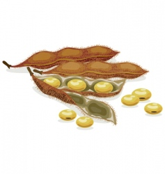 Soybean realistic vector illustration vector