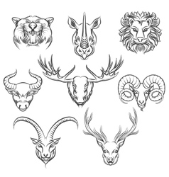 Wild animals hand drawn heads vector