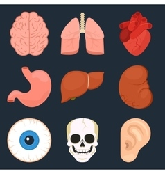 Flat icon set of the human organs vector image