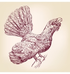 Wood Grouse hand drawn llustration vector image