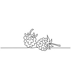 Continuous one line draw raspberry berry fruit vector