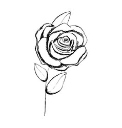 Monochrome sketch with stem of rose with flower vector