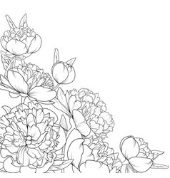 Peony rose garden flowers composition corner frame vector