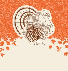 Turkey bird for Thanksgiving day card for text or vector image