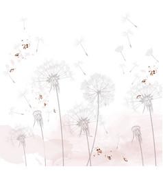 dandelion rustic minimalist style vector image