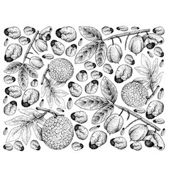 Hand drawn background of ackee fruits and breadfru vector
