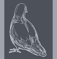 Pigeon back view dove bird monochrome sketch vector