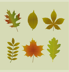 Set of autumn tree leaves shapes vector