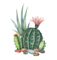 Watercolor collection of cacti and vector