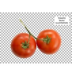 Fresh tomatoes vector image