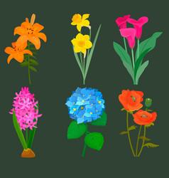 beautiful flower bouquet design decoration vector image