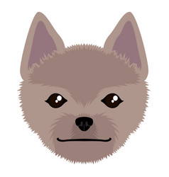 norwich terrier avatar vector image