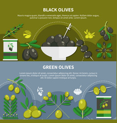 olives flat banners vector image