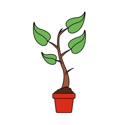 Plant on a pot icon vector