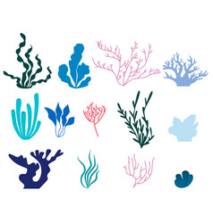 set of elements of seaweed and coral vector image