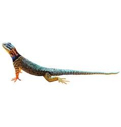 A lizard vector