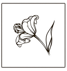 Beautiful lily flower close-up side view vector