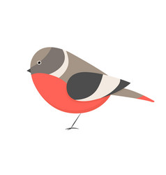 cute little colorful bird isolated on white vector image