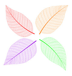 multicolored leaves in the contour vector image