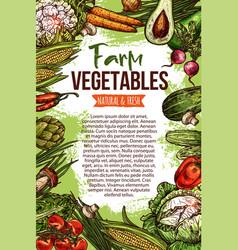 Sketch poster of natural farm vegetables vector