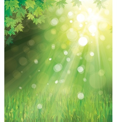 green leaves on sunny background vector image vector image