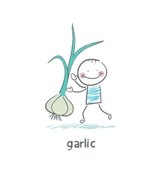 Garlic and people vector image