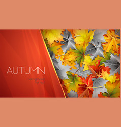 autumn red background for text with foliage vector image