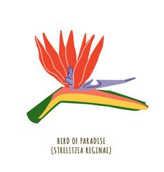 bird paradise tropical flower vector image