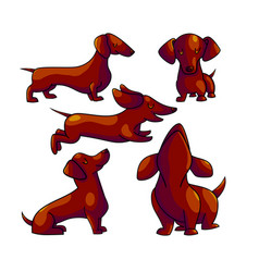 dachshund cartoon color characters set vector image