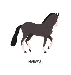 Marwari breed horse flat vector
