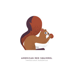 red american squirrel isolated animal cartoon vector image