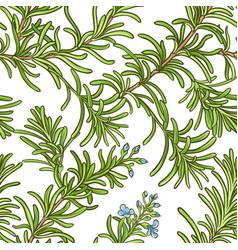 rosemary branch pattern vector image