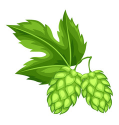 Green hops with leaf for oktoberfest vector