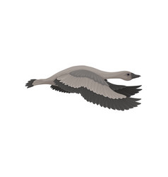 Goose in flying action side view wild bird with vector
