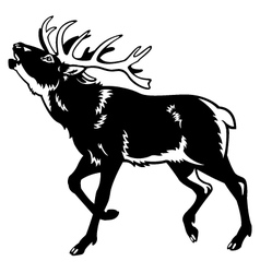 red deer black and white vector image