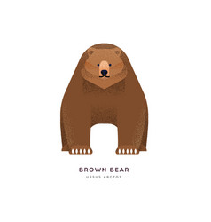 brown grizzly bear isolated animal cartoon vector image