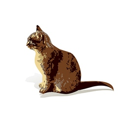 Brown house cat isolated on white background vector