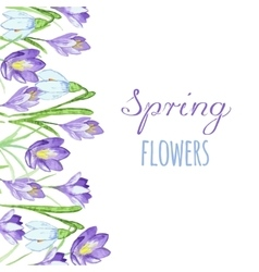 Early spring purple crocus and snowdrops nature vector image