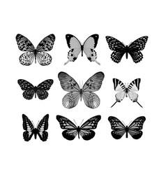realistic butterflies vector image