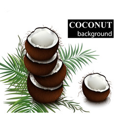 coconut fruits delicious natural fresh vector image