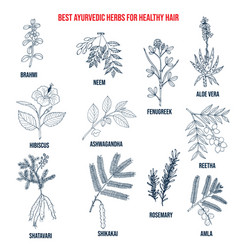 Collection best ayurvedic herbs for healthy vector