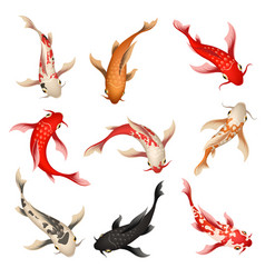 Koi fish set vector