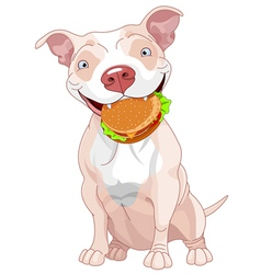 Pit Bull Dog Eats Hamburger vector image