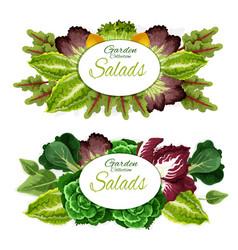 salad leaf vegetables and green plants vector image