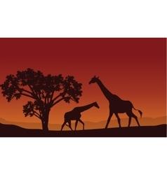 Two giraffe silhouette scenery vector image