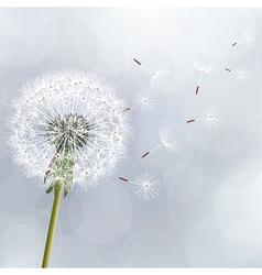 Floral trendy background with flower dandelion vector image