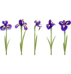 Set with five detailed irises vector image