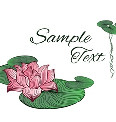 Pink Lotus flower vector image